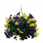 "CG573 22"" Purple and Yellow Pansy Ball"